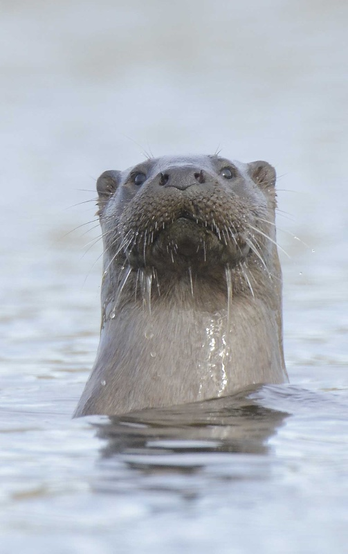 otter02-070515-org_edited-6